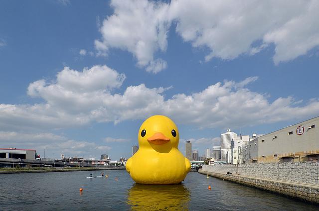 duck-g-b10