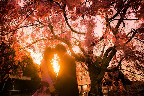 桜ロケーション写真